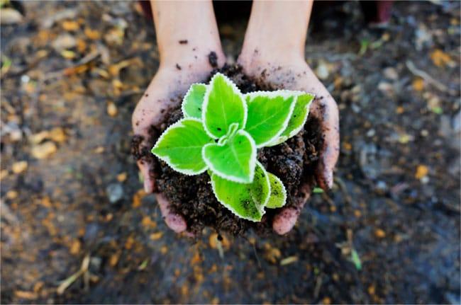 Alimentos ecológicos y por qué incluirlos en tu dieta
